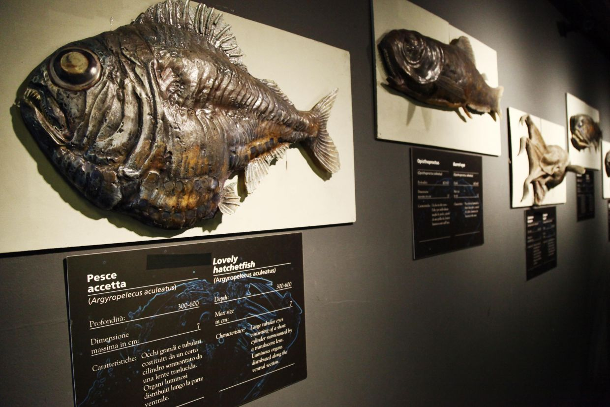 interactive exhibition of large fish in genoa