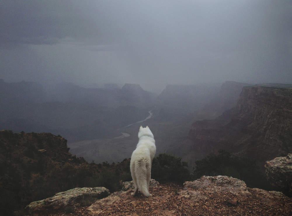 John & Wolf United States Mountain View