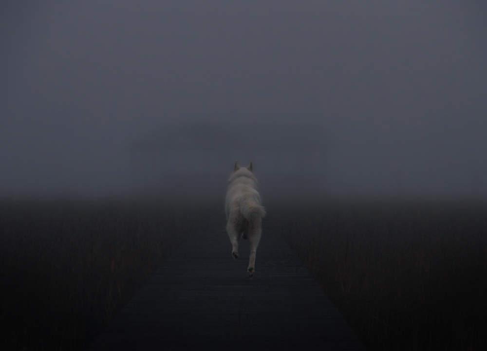 John & Wolf United States Fog