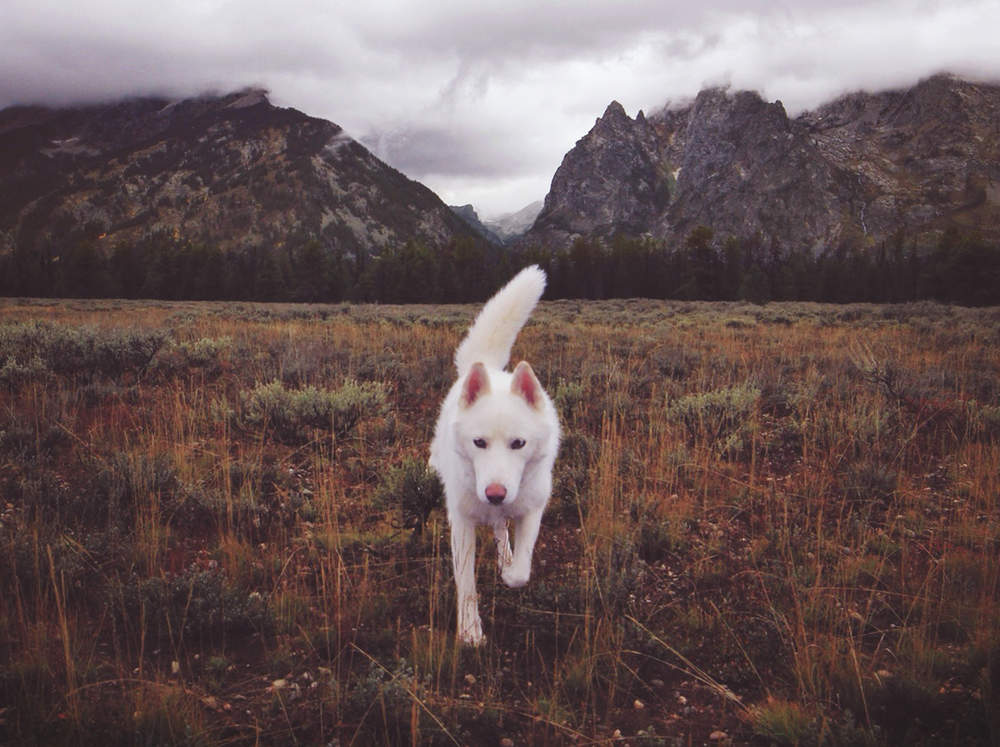 Wolf United States