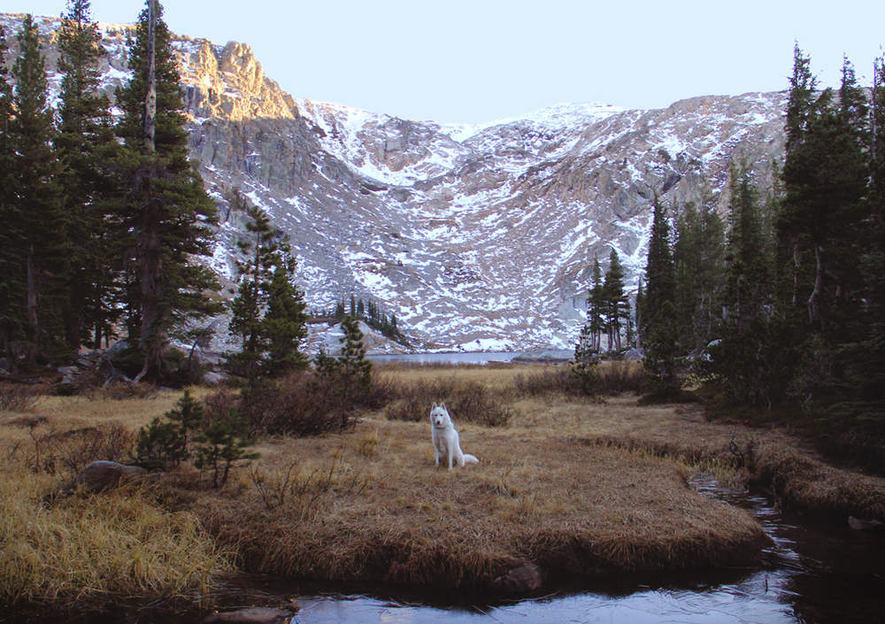John & Wolf United States Snowy mountains
